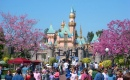 Springtime in Disneyland