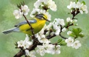 Yellow Bird and Cherry Blossoms