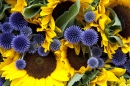 Blue Globe Thistle and Sunflowers