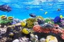 Corals and Fish, Red Sea, Egypt