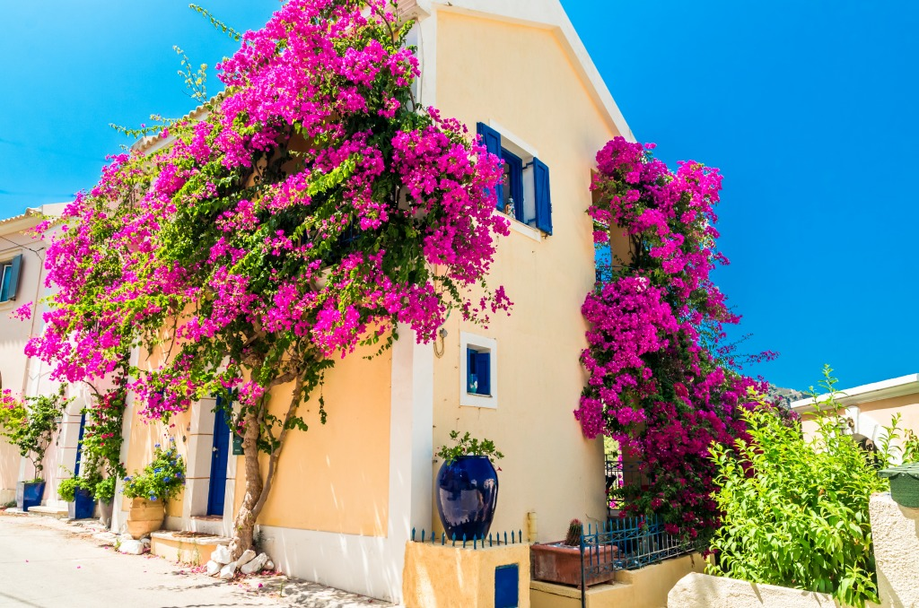 greek house with flowers jigsaw puzzle in flowers puzzles on