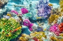 Corals and Tropical Fish puzzle on TheJigsawPuzzles.com