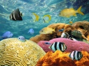 Colorful Corals and Tropical Fish