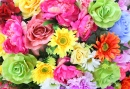 Bright Colorful Flowers