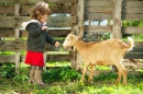 Little Girl Feeding a Goat