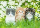 Three Little Kittens