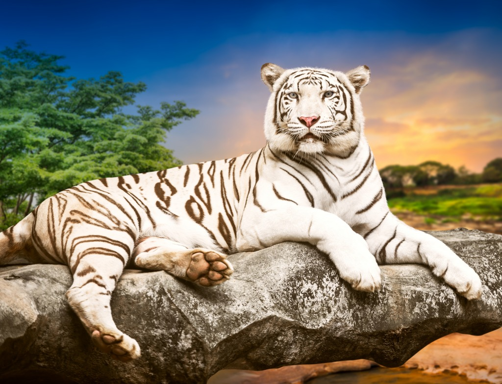 White Bengal Tiger jigsaw puzzle in Puzzle of the Day
