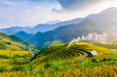 Rice Terraces in Mu Cang Chai, Vietnam