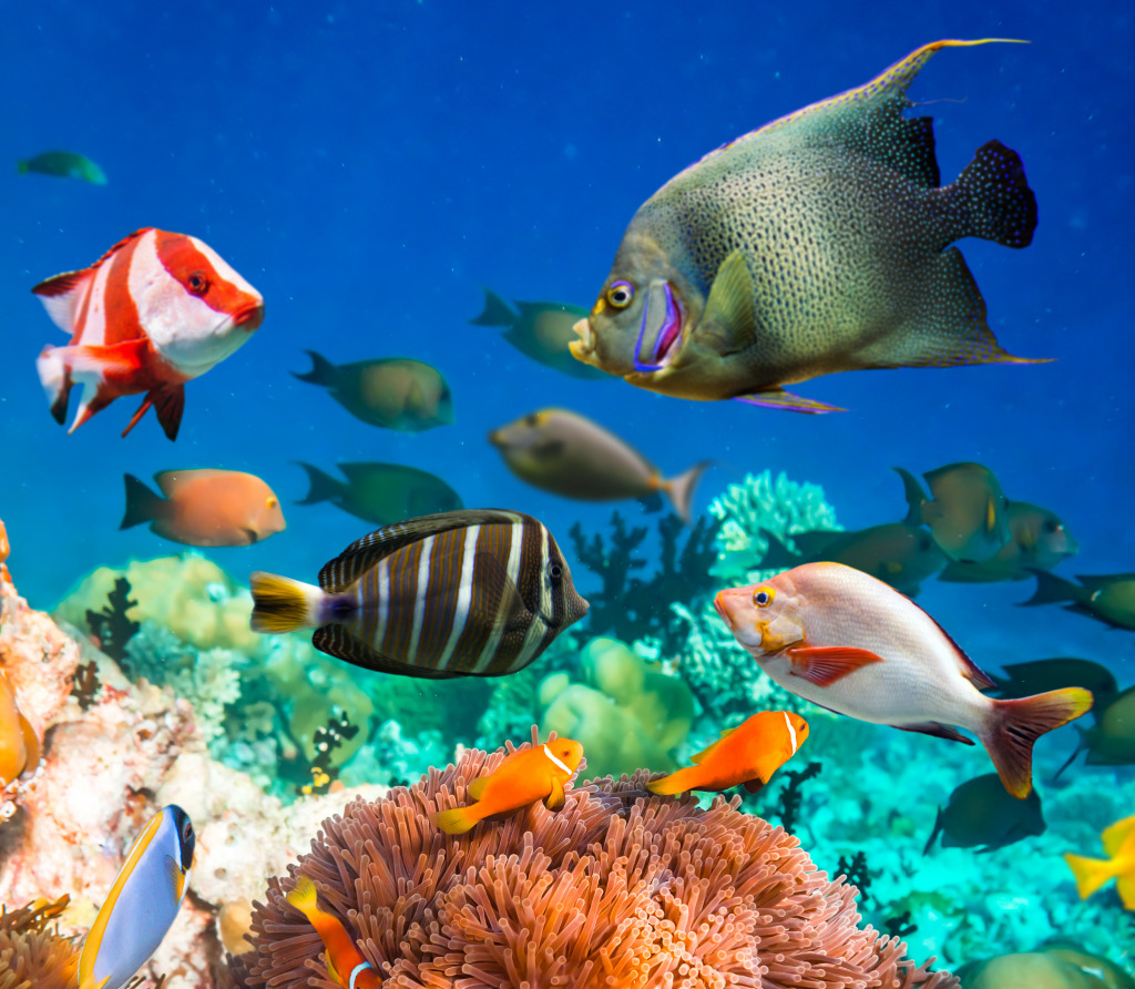 Coral Reef In The Maldives Jigsaw Puzzle In Under The Sea