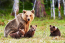 Brown Mother Bear with Cubs