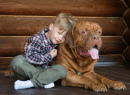 A Boy and His French Mastiff
