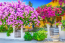 Greek House with Bougainvillea