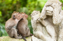 Sacred Monkey Forest, Ubud, Indonesia