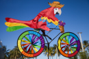 Parrot Cyclist
