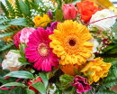 Colorful Gerbera Closeup