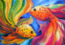 Goldfish Couple