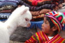 A Boy and an Alpaca. Arequipa, Peru