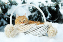Cat in a Wicker Basket