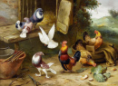 Chickens, a Dove and Pigeons in a Farmyard