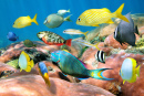 Colorful Tropical Fish School
