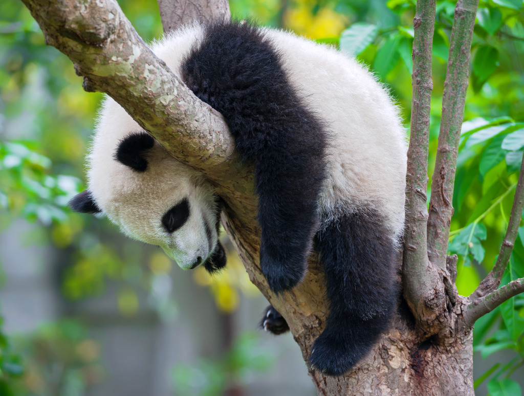 Lazy Panda jigsaw puzzle in Animals puzzles on ...