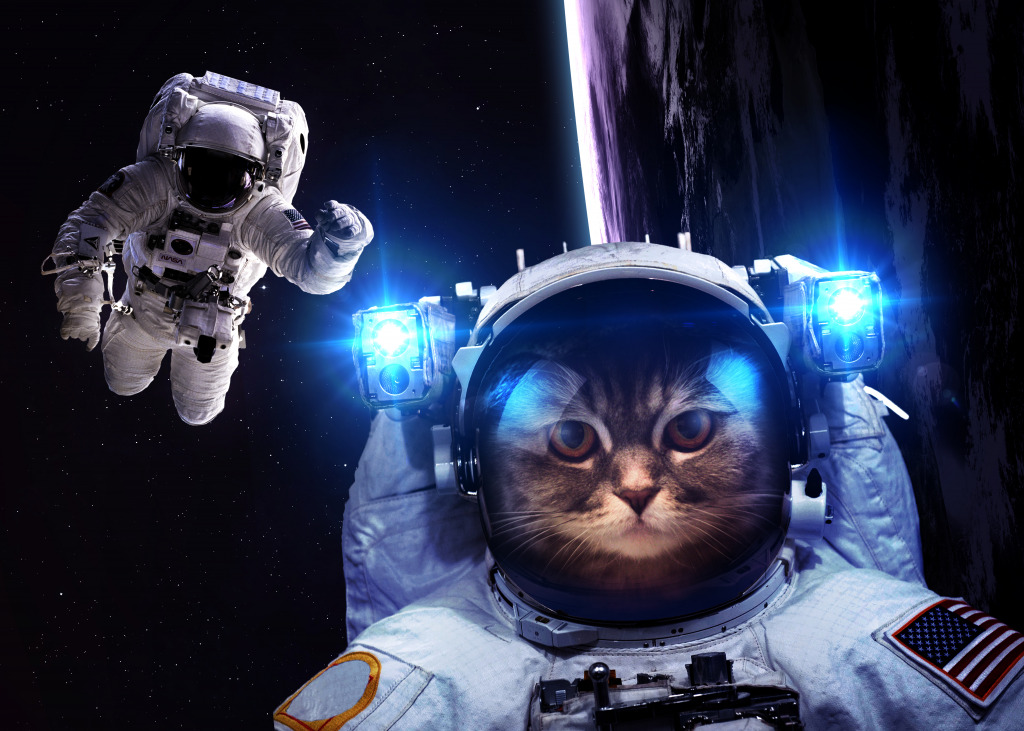 Astronaut Cat jigsaw puzzle in Puzzle of the Day puzzles ...