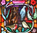 Local Wildlife, Dornoch Cathedral