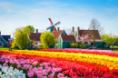 Dutch Landscape with Tulips