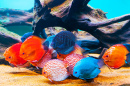 Colorful Fish in the Aquarium