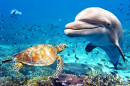 A Dolphin and a Turtle