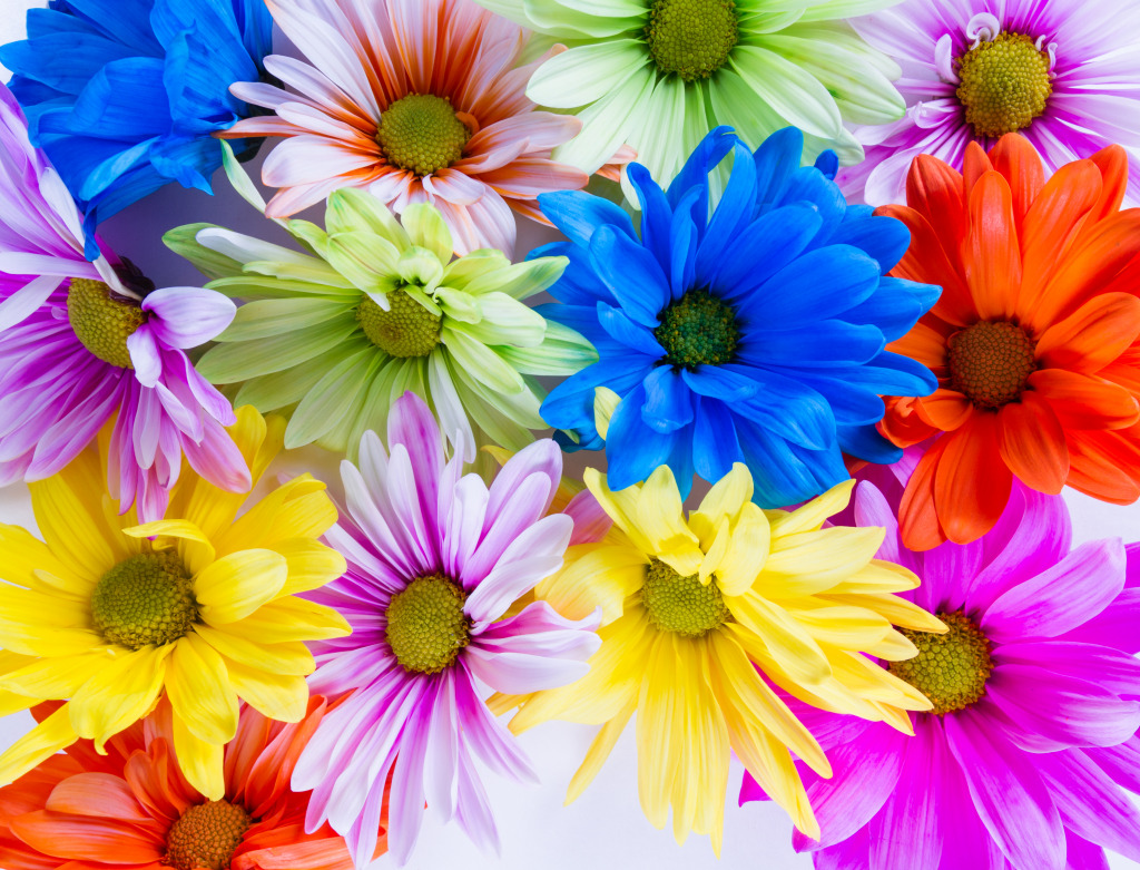 Colorful Spring Flowers Jigsaw Puzzle In Macro Puzzles On