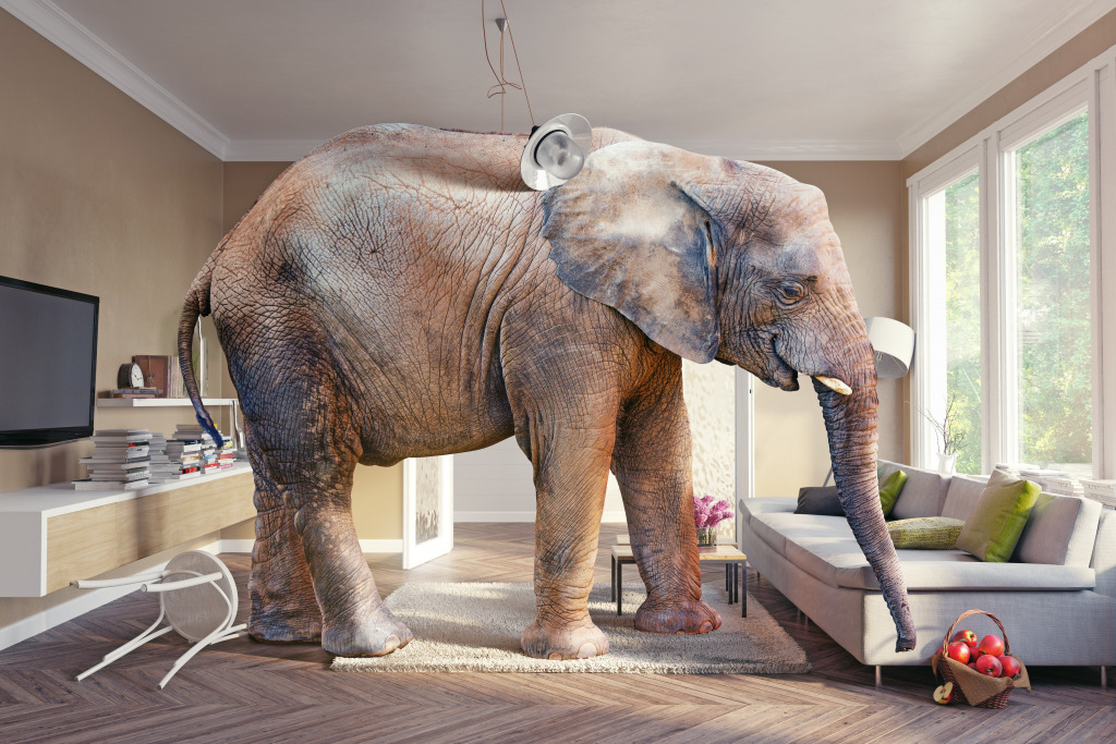 Elephant in the Room jigsaw puzzle in Animals puzzles on ...