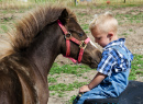 Friendly Miniature Horse