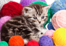 Kitten with Balls of Yarn