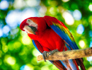 Colorful Ara Parrot