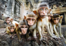 Curious Baby Monkeys, Lopburi, Thailand