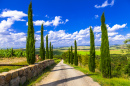 Alley with Cypresses, Tuscany, Italy