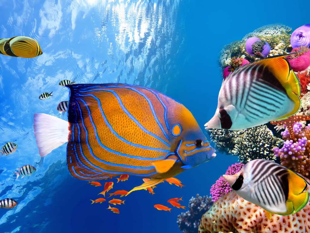 Underwater world with corals and tropical fish jigsaw for Show me pictures of fish