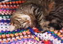 A Cat on a Crochet Blanket