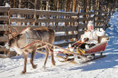 Reindeer Sledge Ride in Finland