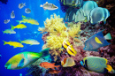 Tropical Fish, Red Sea