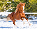 Horse Galloping at the Farm