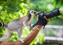 Lemur Photographer