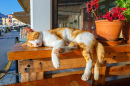 Red Cat Sleeping on a Bench