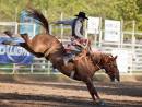Rodeo in Willits CA