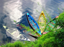 Colored Boats by Phewa Lake, Nepal