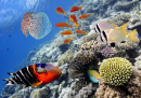 Tropical Fish, Red Sea, Egypt