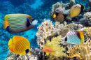 Underwater Landscape with Fish and Corals