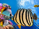 Corals and Tropical Fish, Red Sea