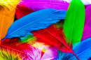 Colourful Feathers